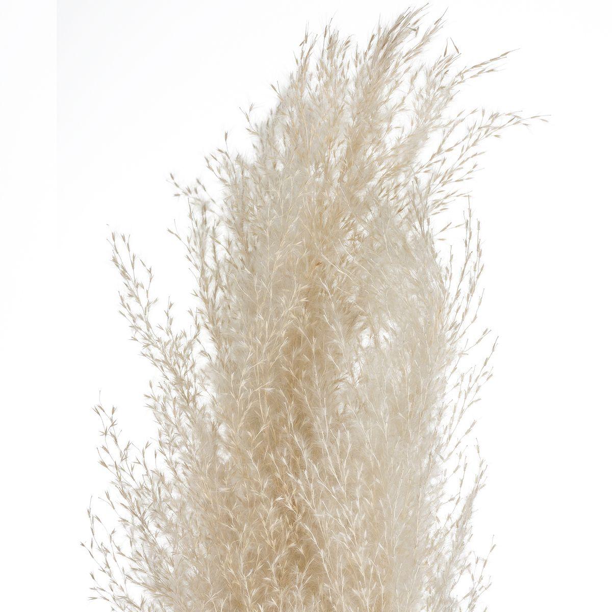 Lot de 3 fleurs de la pampa naturelles séchées H. 110 cm